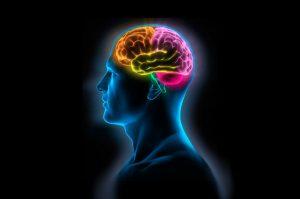 Visión del cerebro humano